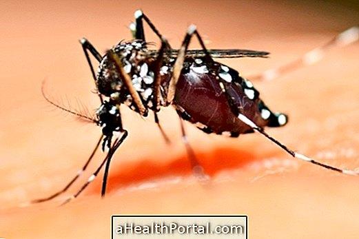 Saznajte više o Aedes Aegypti životnom ciklusu