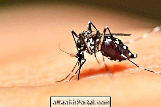 Apprenez à identifier et à combattre le moustique Aedes Aegypti