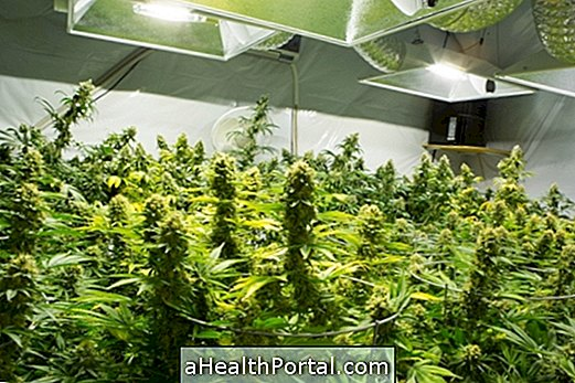 Understand when Marijuana can be used as a Medicinal Plant